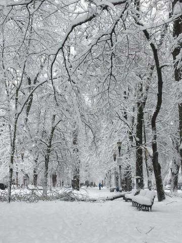 <p>Portland's downtown park blocks transformed by the snow.</p>