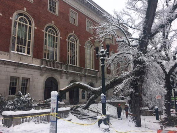 <p>A large tree limb fell on the steps of the Central Library in downtown Portland, Jan. 11, 2017.</p>