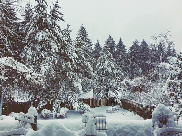 <p>A view of a snowymorning in Lake Oswego, Oregon.</p>
