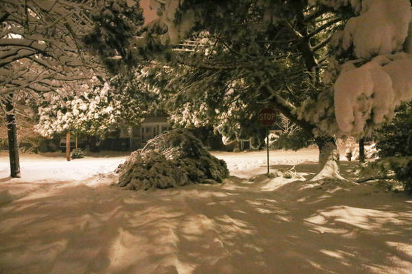 <p>A fallen tree blocks the intersection of Lambert Street and Milwaukie Avenue in Portland's Sellwood neighborhood during a snow storm on Wednesday, Jan. 11, 2017.</p>
