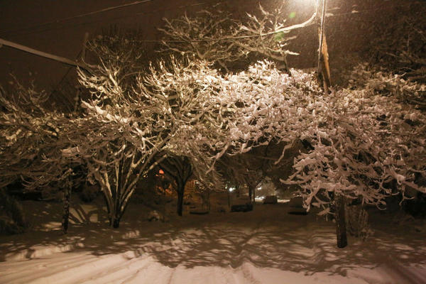 <p>Many parts of Portland saw several inches of snowfall Tuesday night into Wednesday, Jan. 11, 2017, leaving side streets like Lambert Street in Portland's Sellwood neighborhood covered.</p>