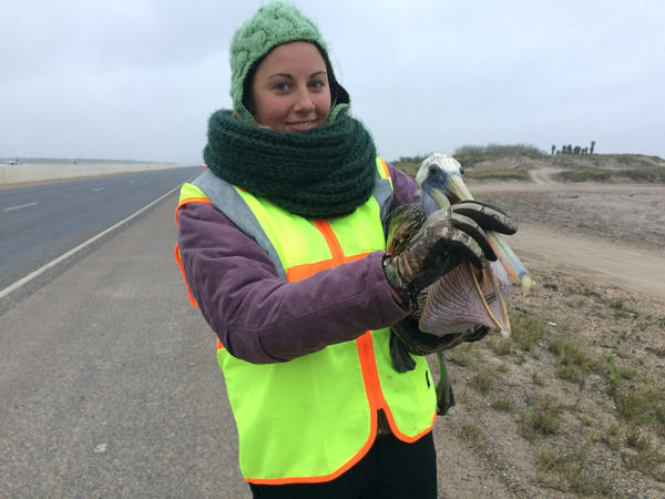 Stephanie Bilodeau holds a pelican on the shoulder of Highway 48 from Brownsville to Port Isabel.