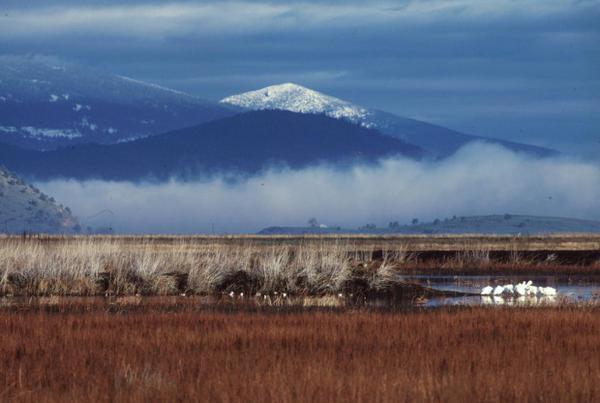 <p>Lower Klamath National Wildlife Refuge</p>