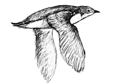 "An illustration by Ann Arbor native Tom Pohrt found within the pages of ""The Bird-while"" by Keith Taylor."