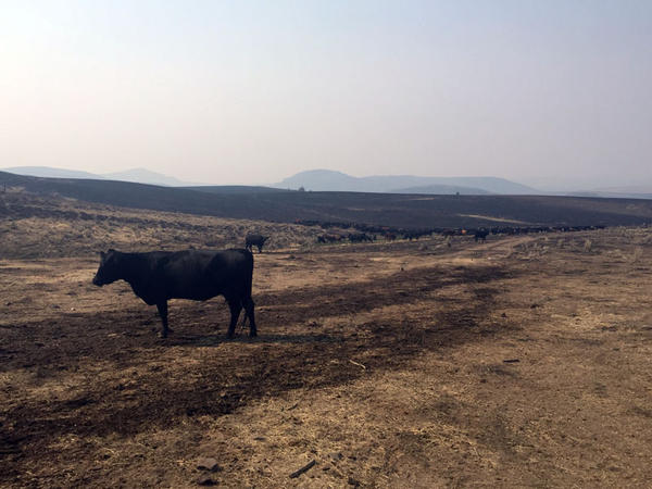 The Soda Fire in August 2015 burned more than 400 square miles -- most of it federally-managed grazing land.