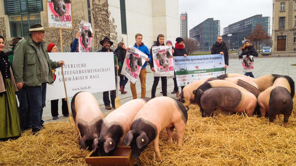 German farmer Rudolf Buehler and other opponents of the Transatlantic Free Trade Agreement protest with 17 pigs in front of the chancellor's office building in Berlin on Wednesday.