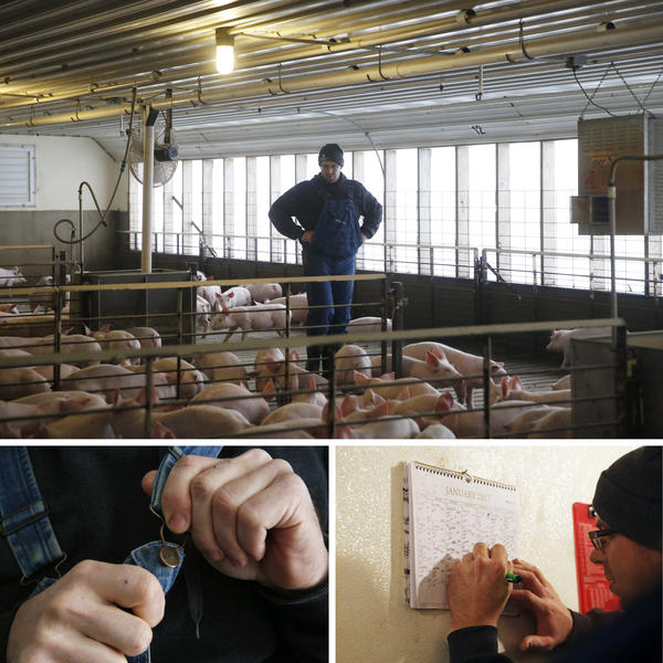 Top) Ryan Kress inspects the youngest pigs. They're about 35 pounds each, with pink snouts and ears and white coats.(Bottom left) Suiting up in a pair of denim overalls. (Bottom right) Kress records information after each visit.