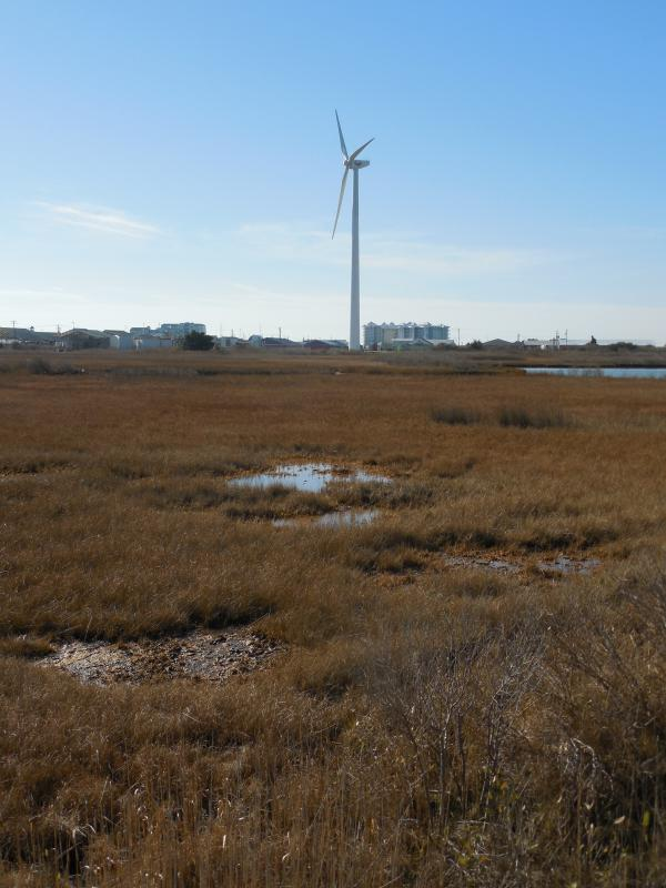 The turbine towers over everything in Crisfield