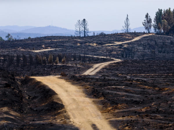 A road cuts through a landscape razed by wildfires in Cauquenes, Chile, on Feb. 2.