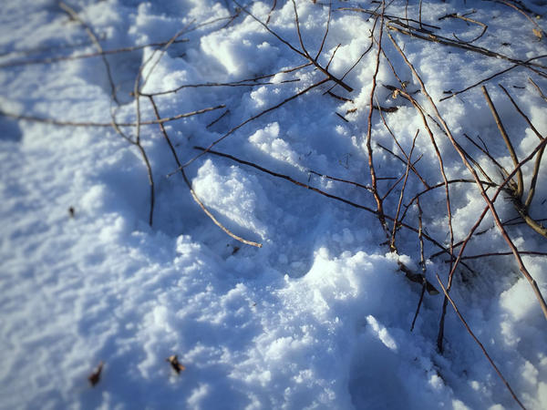 Fresh fruit-tree limbs litter the snow north of Pasco as workers struggle to get started on spring farmwork. Ice storms, rain and snow have damaged some crops and made field work difficult.