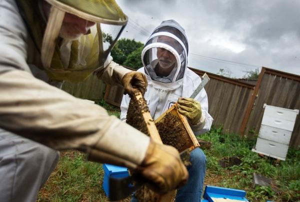 Glen Andresen and Tim Wessels, professional beekeepers, are trying to breed a honeybee more resilient to Oregon winters.
