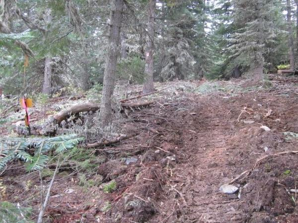<p>Tire tracks pass into the Eagle Cap Wilderness area. It's illegal to drive a motorized vehicle into a wilderness area.</p>