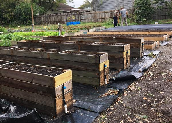 Four of the 10 garden beds built for veterans are raised for accessibility by veterans in wheelchairs.
