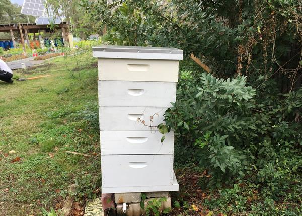 The garden's beehive where veterans will be able to practice the art of beekeeping.