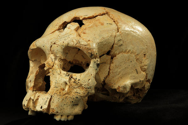 "By comparing ""Skull 17"" from the Sima de los Huesos site with many others found in the same cave, researchers were able to discern the common facial features of the era."