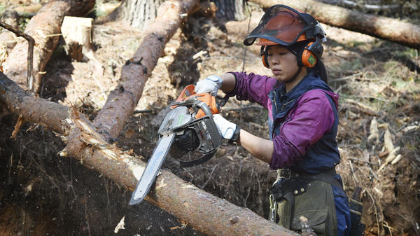 Lumberjack Yukiko Koyama cuts pine trees on a hillside overlooking Matsumoto City in Nagano prefecture on Japan's central Honshu island. Koyama's employment at a local timber mill is partially subsidized by a government program to get more Japanese women into the workforce.