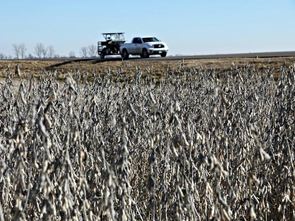 A truck drives on top of a levee that protects a soybean field in New Madrid County, Mo., when the Mississippi River floods.