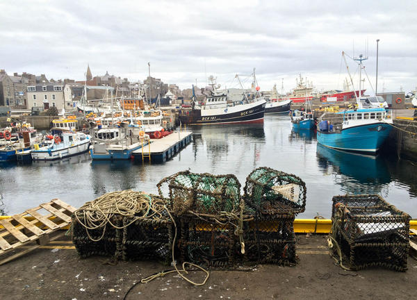 A view of the fishing port in Fraserburgh, Scotland. A decade ago, fishermen trying to catch cod were coming up empty. Now the cod and hake catch is rebounding.