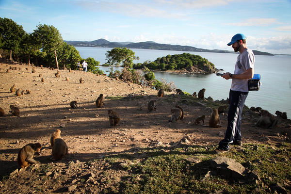 Sean Coyne, a graduate student at the University of Chicago, is on the island studying how the monkeys' shifting hormone levels affect their sexual development.