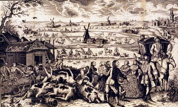 An illustration of rinderpest in the Netherlands in the 18th century. Europeans once feared the cattle virus as much as they did the Black Death.