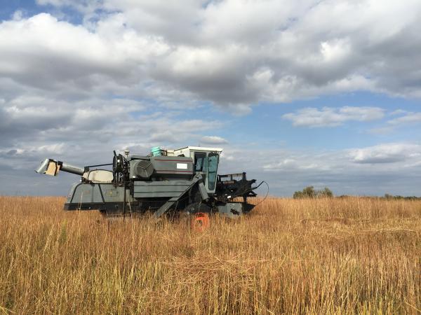 A combine harvester rolls through a Nebraska prairie to collect grass seed.