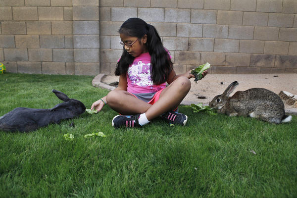 Vanessa feeds her two rabbits in the backyard.