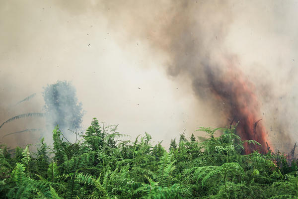 Smoke and flames rise from a peat fire in West Kalimantan Province. Peat fires and deforestation contribute to Indonesia's status as a leading carbon emitter.