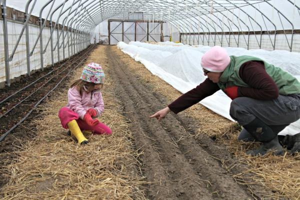 Organic farmer Liz Graznak and her daughter hunt for weeds in the high tunnel at Happy Hollow Farm in central Missouri.