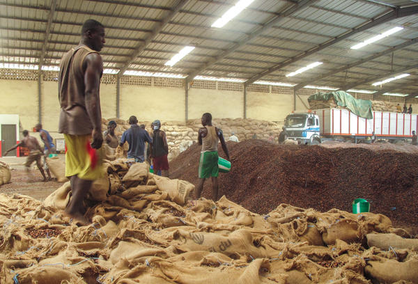 In a large warehouse in the south-western city of San Pedro, men empty sacks of cocoa in the stifling heat. Most processing plants in the city have closed, but some are buying cocoa on the sly.