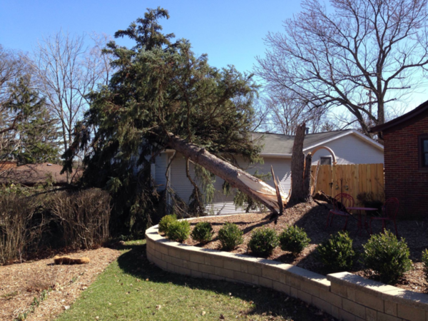 High winds pushed a large pine tree over onto a house in Ann Arbor.