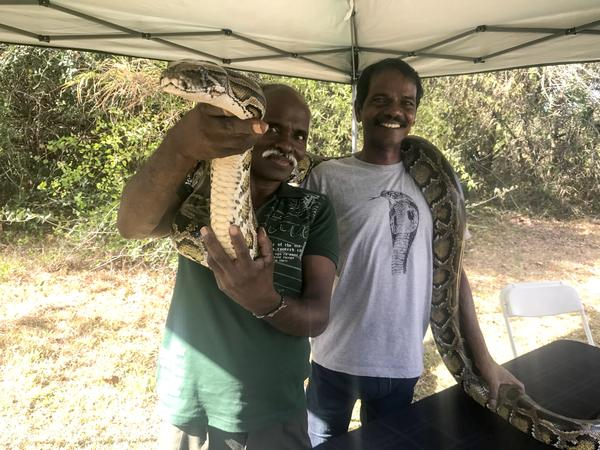 Vadivel Gopal, left, and Masi Sadaiyan came to Florida from India for two months to help catch Burmese pythons.