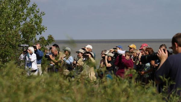 A group of birders watches a rare Kirtland's warbler at the Magee Marsh Wildlife Area in Ohio in May 2010.