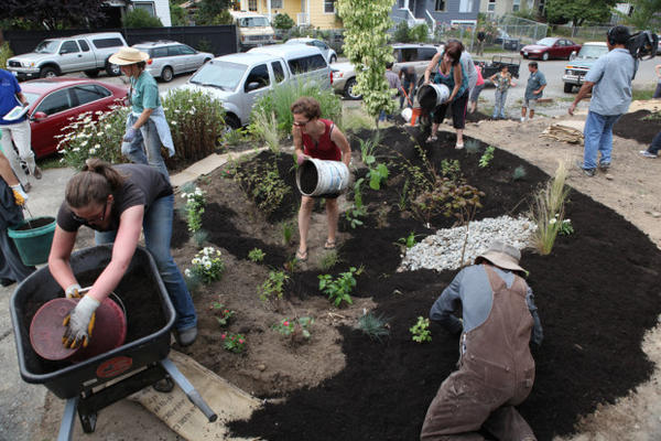 <p>Washington state's permits promote low-impact development and installing things like rain gardens to absorb runoff. This rain garden was built by a West Seattle community group in 2011.</p>