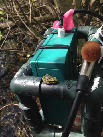 <p>Nelson set up recorders around the Willamette Valley — in William L. Finley National Wildlife Refuge to 100-feet away from I-5 — to collect sound of Pacific chorus frogs.</p>