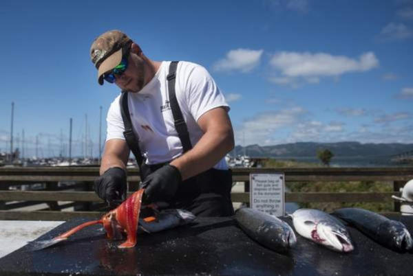 <p>The Port of Astoria is closing fish cleaning stations due to environmental concerns.</p>