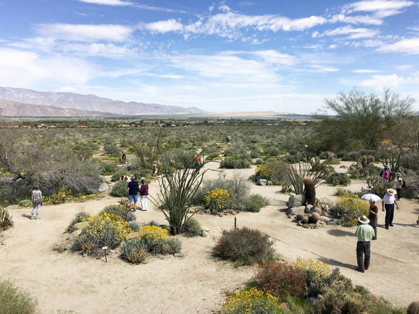 "People are scattered throughout the hills and valleys of Anza-Borrego, Califonia's largest state park, taking in the beauty of a rare ""super bloom"" of wild flowers."