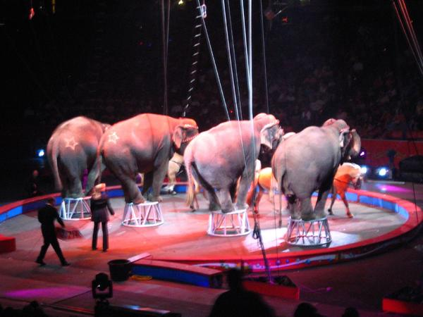 The last ringmaster for Ringling Bros. joined Melissa Ross on First Coast Connect.