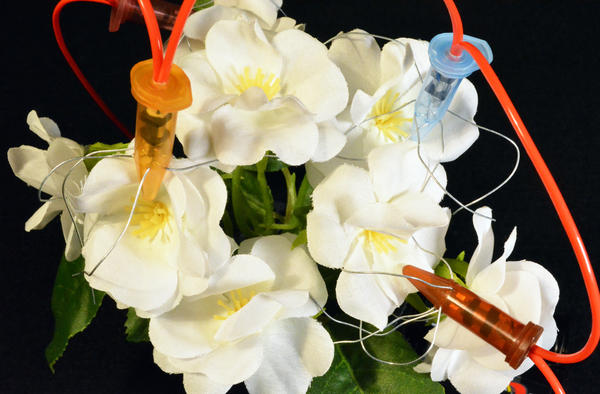 "Jonathon Keats' piece ""Sex Toys for Flowers."" (Courtesy)"