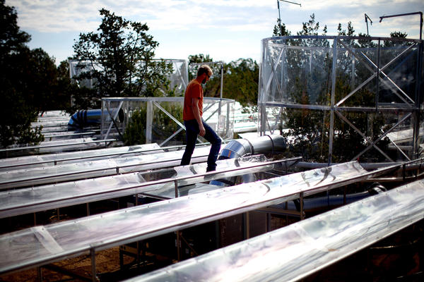 Powers walks along plastic gutters designed to keep rain away from tree roots to simulate drought. Scientists here are studying the effects of sustained drought conditions on the tree species of the Southwest.