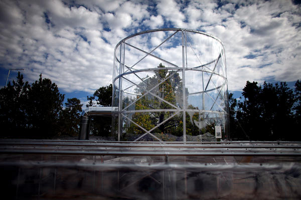 A tree stands surrounded by a chamber that keeps the temperature about 7 degrees warmer than the outside air. Scientists say the cycle of heat and drought in the region has intensified because of a warming climate.