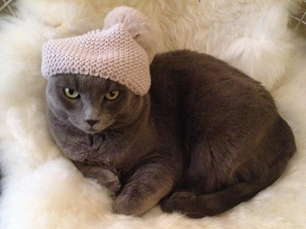 Bruiser's hat-wearing skills aren't in doubt — but does he have what it takes to be a true Internet celebrity?