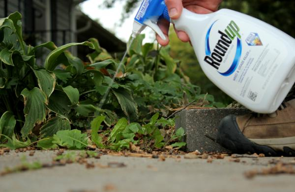 The vast majority of glyphosate is used on farm fields, on crops that are modified to withstand the herbicide. But it is also common on lawns and gardens.