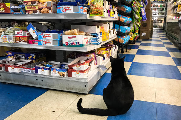 A black cat sits at the end of a food aisle inside A & M Supermarket.