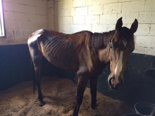 This horse was found starving and near death at horse farm in Mercer County