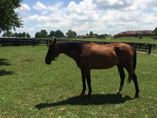 This horse named Shipliner is living out his retirement being cared for by inmates at Blackburn