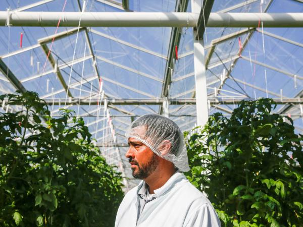 Carlos Gonzalez helps run the  greenhouse growing operations at Wholesum Farms Sonora, in Mexico.
