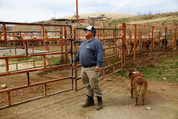 Juan Manuel Fleischer, a cattle broker based in Arizona, watches for the herd of cattle he bought in Mexico to cross into the U.S.