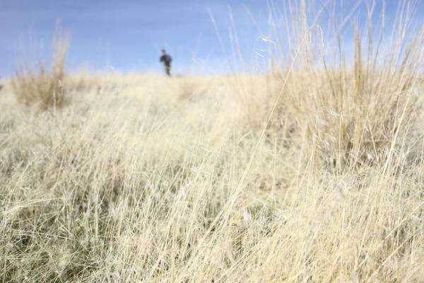 <p>Cheatgrass dominates the landscape in the Owyhee. The invasive species is a problem in much of Eastern Oregon.</p>