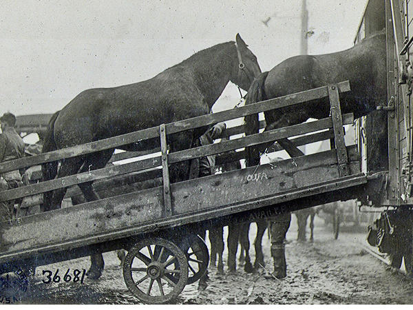 U.S. horses were loaded onto transport ships that went from the U.S. to European ports and later to the war front.