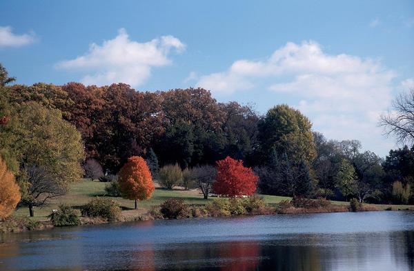 Oaks at a lake at The Morton Arboretum